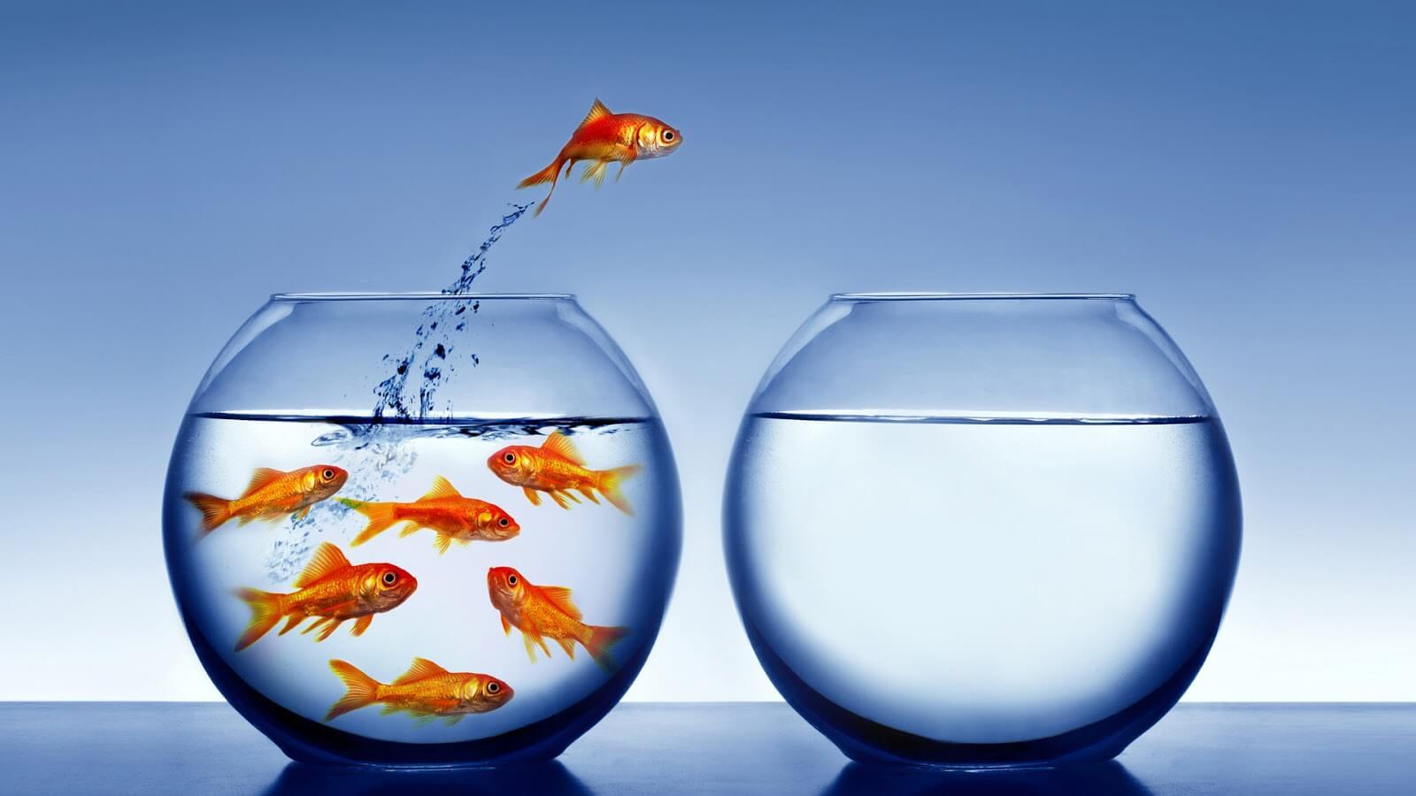 pez que hace un cambio para mejorar